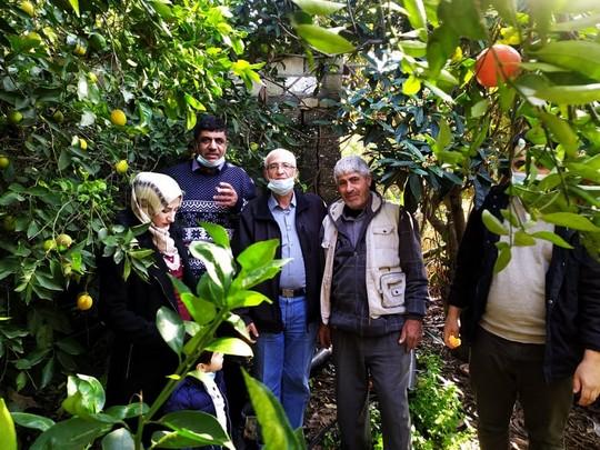 Les jeunes francophones participent à la récolte des agrumes à Gaza