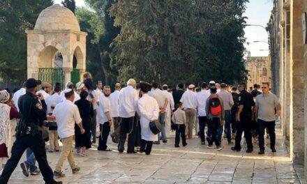 Des colons envahissent al-Aqsa et organisent des promenades provocatrices sur ses esplanades