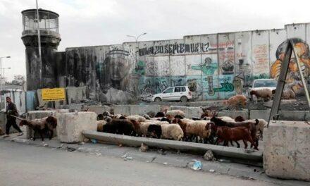 Nous sommes la plus grande association de défense des droits de l'homme d'Israël et nous appelons cela apartheid