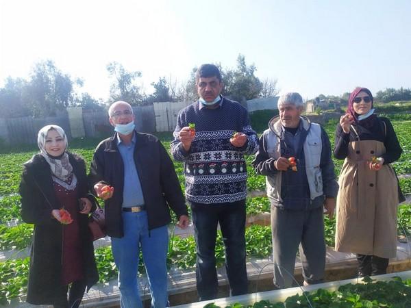 Les jeunes francophones participent à la récolte des fraises au nord de la bande de Gaza