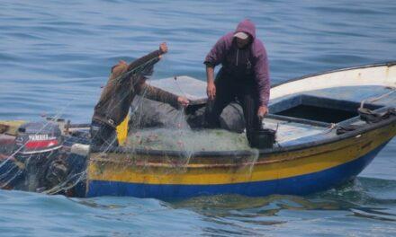 Un tour avec les pêcheurs de Gaza – Une visite à la poissonnerie de Gaza