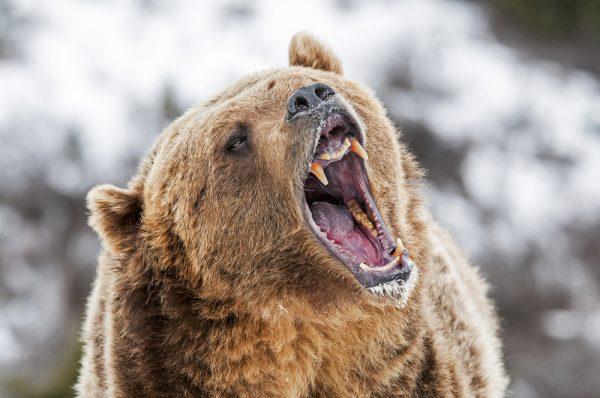 Ne pas chatouiller l'ours, conseil aux Ukrainiens