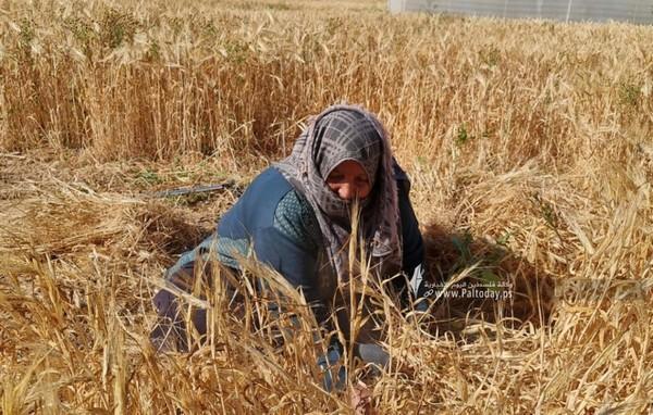 Femme âgée de Gaza – Femme digne, femme déterminée