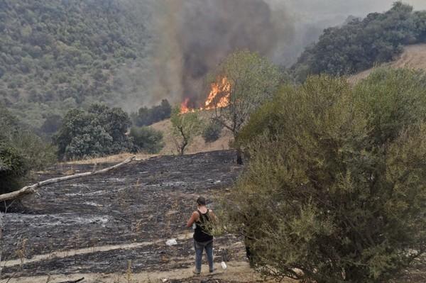 Algérie : faussement accusé d'avoir démarré un feu de forêt, un homme est assassiné et brûlé