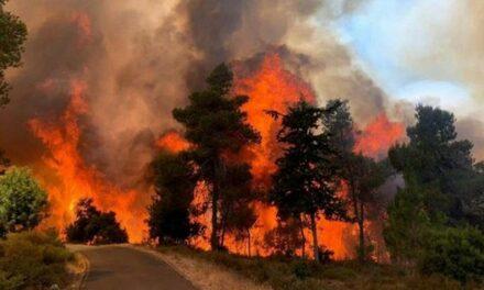 Incendies : Les habitants d'Ain Naqouba à Jérusalem refusent d'évacuer leurs maisons