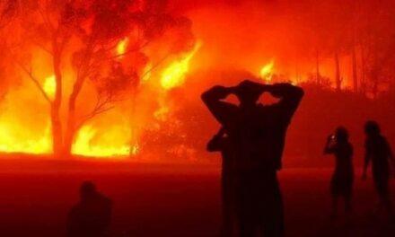A propos des incendies en Algérie