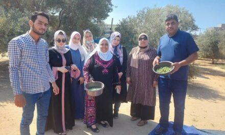 Les étudiants et les diplômés de français participent à la cueillette des olives à Gaza